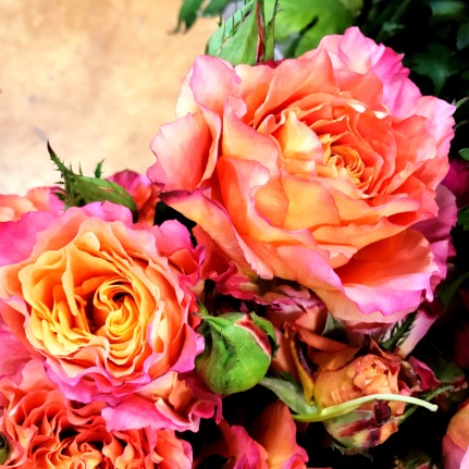 More Vibrant Roses
